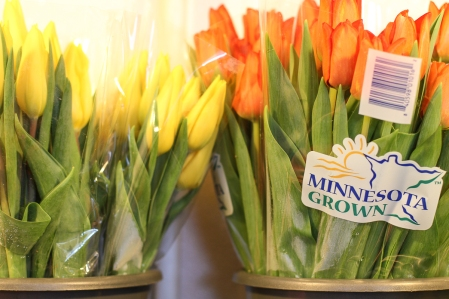 Spring, Flowers, Minnesota, Twin Cities, Florist, Floral, Flowers, Tulips, Shamrock, Clover, Saint Patrick's Day, Main Floral, Anoka, Coon Rapids, Champlin, Dayton, Area, Near, By, Blog, Best, Delivery, Tulip, Care, Facts, Trivia