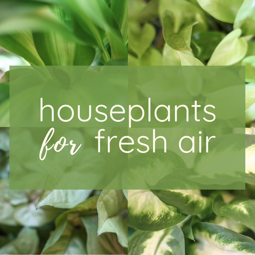 Benefits of Houseplants { Twin Cities Plant Delivery }